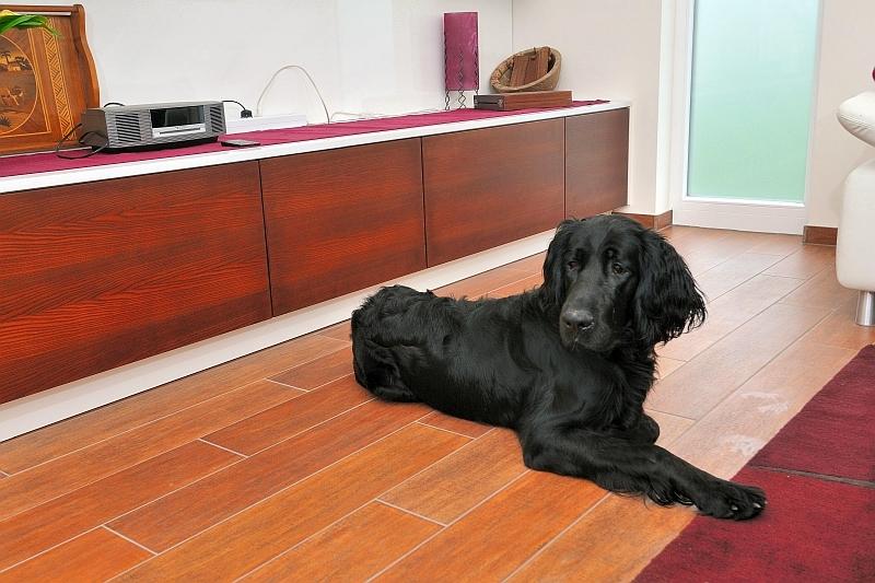 darf der hund in die k che k chenkompass. Black Bedroom Furniture Sets. Home Design Ideas